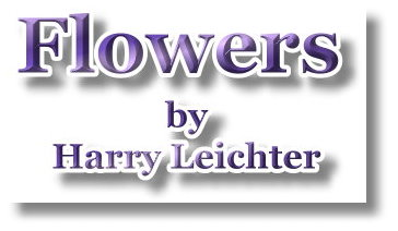 flowers by harry leichter